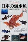 日本の海水魚    フィールドベスト図鑑