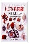 貝の写真図鑑—オールカラー世界の貝500    地球自然ハンドブック