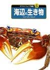 ヤマケイジュニア図鑑〈6〉海辺の生き物    ヤマケイジュニア図鑑 (6)