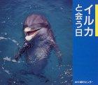 イルカと会う日