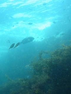 伊豆海洋公園オクリダシ