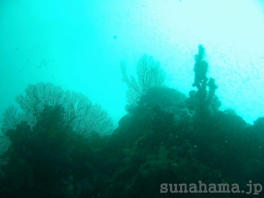 ちょっと濁った水中景色の壁紙 1024×768【伊豆の海中壁紙 水中写真を壁紙にしました!】