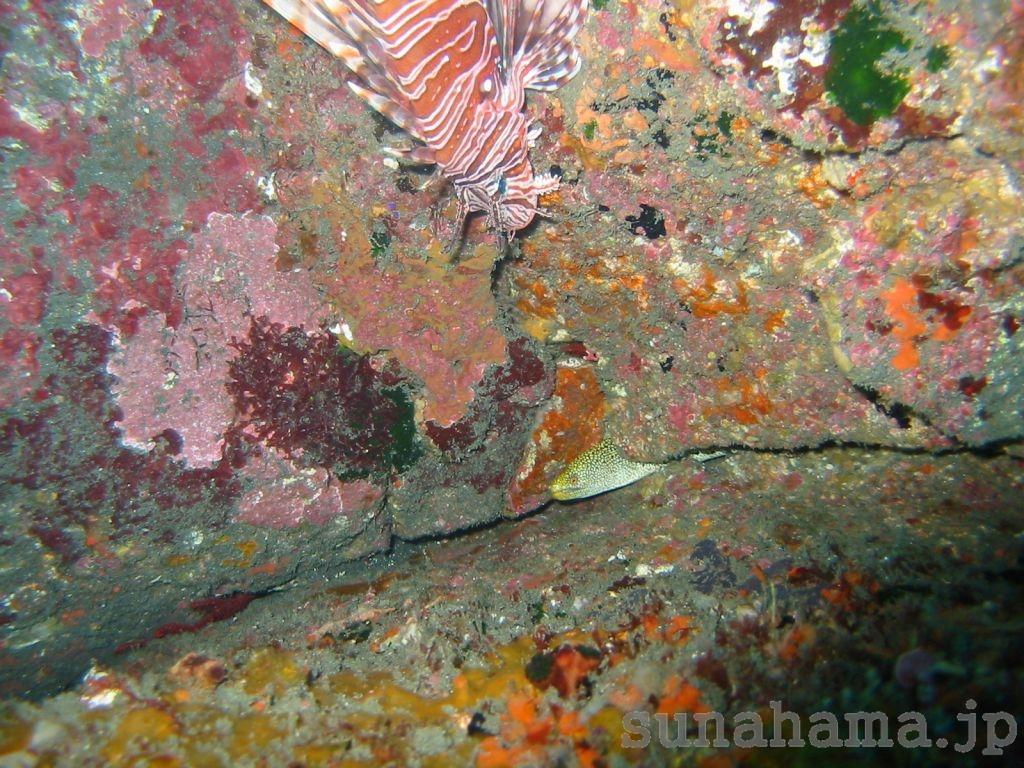 ウツボとミノカサゴの壁紙 1024×768【伊豆の海中壁紙 水中写真を壁紙にしました!】