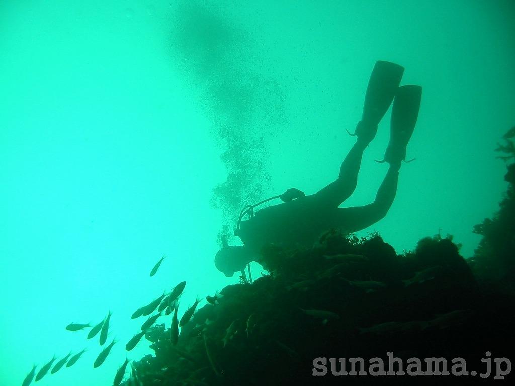 ダイバーの壁紙 1024×768【伊豆の海中壁紙 水中写真を壁紙にしました!】