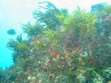 大久保浜の根の壁紙【伊豆の海中壁紙 水中写真を壁紙にしました!】