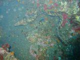 ウツボのクリーニングの壁紙【伊豆の海中壁紙 水中写真を壁紙にしました!】