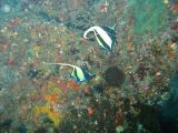 ツノダシの壁紙【伊豆の海中壁紙 水中写真を壁紙にしました!】