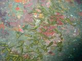 ゴンズイの壁紙【伊豆の海中壁紙 水中写真を壁紙にしました!】