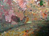 ウツボとミノカサゴの壁紙【伊豆の海中壁紙 水中写真を壁紙にしました!】