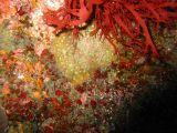 サンゴの壁紙【伊豆の海中壁紙 水中写真を壁紙にしました!】