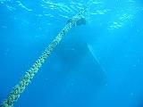 ダイビングボートの壁紙【伊豆の海中壁紙 水中写真を壁紙にしました!】