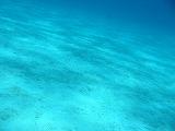 砂地の壁紙【伊豆の海中壁紙 水中写真を壁紙にしました!】