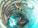 お魚いろいろの穴の壁紙【伊豆の海中壁紙 水中写真を壁紙にしました!】