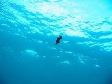 ヒラムシの壁紙【伊豆の海中壁紙 水中写真を壁紙にしました!】