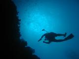 ダイバーの壁紙【伊豆の海中壁紙 水中写真を壁紙にしました!】
