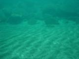 砂紋【伊豆の海中壁紙 水中写真を壁紙にしました!】